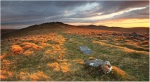 dartmoor national park devon south west england english moor moorland granite  country countryside grass grasses tor landscape landscapes , miscellaneous , Stephen Sellman , miscellaneous , Stephen Sellman