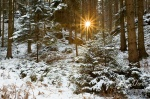 forest, sunrise, national park, sun, sunstart, fir tree, schnee, sunrise, saxony, sachsen, germany , East Germany , Dave Derbis