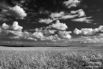 breeze, lüftchen, corn, field, korn, feld, sommer, summer, clouds, wolken , East Germany , Dave Derbis
