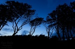 beach, trees, silhouette, baltic sea, blue hour, twilight, germany, 2011 , Baltic Sea , Dave Derbis