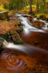 autumn, stream, forest, harz, national park, cascade, 2011 , Harz National Park , Dave Derbis