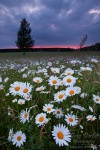 harz national park sunset meadow flowers grass , Harz National Park , Dave Derbis