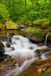 ilse, ilsetal, sachsen-anhalt, ilsenburg, summer, stream, creek, cascade, national park , Harz National Park , Dave Derbis