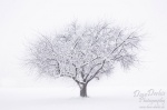 tree, cold, winter, white, snow, schnee, biberach, baum, kalt , Alps , Dave Derbis