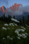mountain, dolomites, sunset, flower, meadow, clouds, alpenglow, italy, 2011 , Dolomites, Italy , Dave Derbis