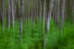 forest, tree, batic sea, abstract, germany, 2011 , Baltic Sea , Dave Derbis