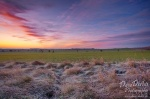 morning, sunrise, brumby, grassland, frost, cold, tundra, sun, germany , East Germany , Dave Derbis