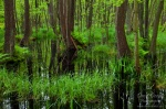 forest, baltic sea, grass, swamp , Baltic Sea , Dave Derbis