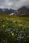 storm, mountains, dolomites, clouds, meadow, wildflowers, passo rolle, passo, rugged, italy, 2011 , Dolomites, Italy , Dave Derbis